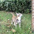 小區的流浪貓