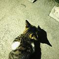 偶遇一只小猫咪🐱