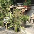 好想要这么一个院子。😄😄
