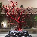 自个收藏的一颗珊瑚树形,给大家欣赏下。