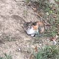 昨晩去公园跑步,草丛里看到一群小流浪猫,其中一只特别可爱
