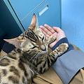 小豹妞儿第一次去打疫苗