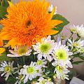 賣花的說名字叫做吉娃娃的向日葵,壇友說是泰迪菊,還是壇友靠譜