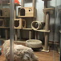 主子第一次住猫旅馆