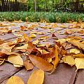 秋雨点叶黄,霜降北京城