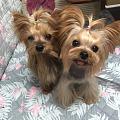 家里的狗子们