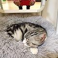 有没有谁家的小猫咪和我家李耳王一样作息特别规律的?哈哈哈