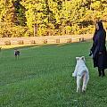一狗二鹿 狭路相逢 怂狗胜