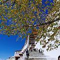 西藏确实很美