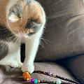 帮妹妹搭配的多宝项链被妹妹家的猫先看中了(*^_^*)哈哈哈哈