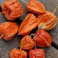 深秋的瓜果蔬菜