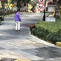 小区里看到一只大狗,爱狗人士也给吓得不轻