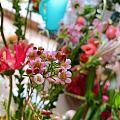 充满仙气的花朵