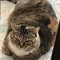 我家的猫都特别瘦,真的
