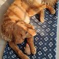 俩狗最爱的玩具