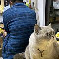 合格的猫奴。。