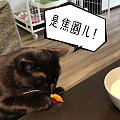 这是一只老北京猫没错了!