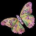 好美的蝴蝶