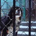 今年的狗子雪景照~
