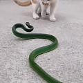 猫怕不怕蛇?