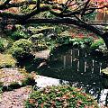 京都赏红叶