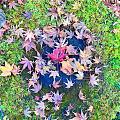 京都赏红叶(2)
