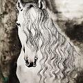 第三幅《白马》