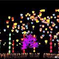 我们的元宵节灯会,看了图片心里很难过,希望灾难赶紧过去,希望我们每个人都好好的