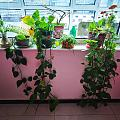 今天流行晒植物?
