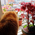 枫叶在广东地区能养活吗?