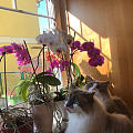 懂得欣赏花的猫
