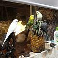 鸟儿,霸占厨房