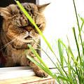 春风吹又生,再顽强的草也逃不过ET的嘴(多图)