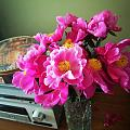 坛红芍药花