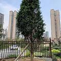 种了两天的树🌲🌲🌲