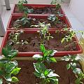 我的小菜园子