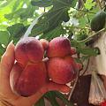 老板送的桃子