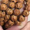 被这条百香籽的皮质惊到了!