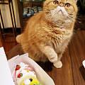不让他吃,急得都想和我动手了。。。自己的猫自己哄。。。