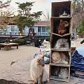 猫咪公寓哈哈哈