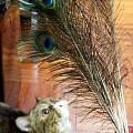 别在猫面前炫耀你的羽毛