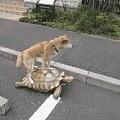 如何让狗不在楼道里拉尿?