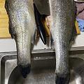 坛子里大神比较多,姐妹们海鲈鱼怎么做着好吃呀,昨晚炖了一个鱼头,很鲜美😄