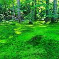 炎炎夏日,来点绿色看看吧。