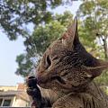 偶遇搔首弄姿的猫星人