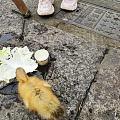 可爱(๑• . •๑)的小黄鸭