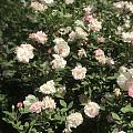 现在手机里的照片全都是花花,不管什么类型的花,颜色都鲜艳动人,看到美好的植物...