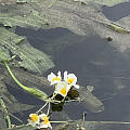 一条会开花的河