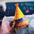 生日快乐,馒头!