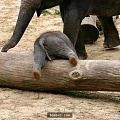 跟风热点🐘:想看看大家的大象吊坠